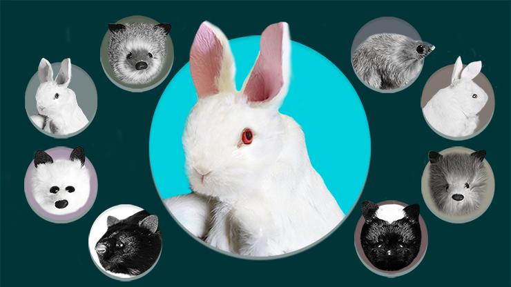 Rabbit Spring Animal by Magic Masters - Trick