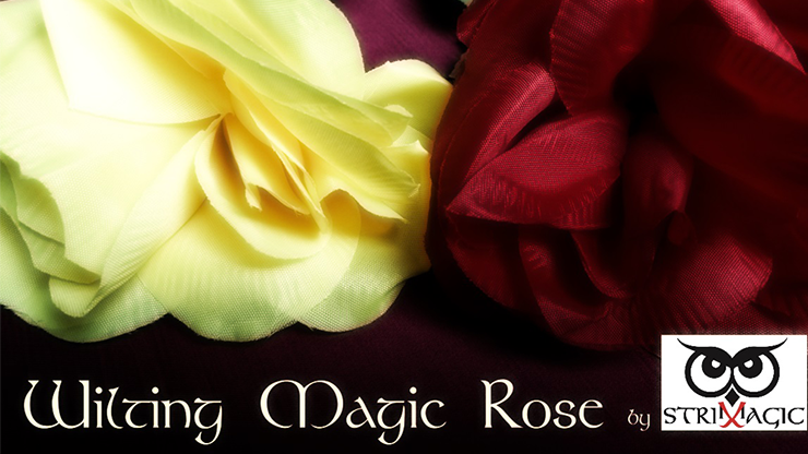 Wilting Rose by Strixmagic